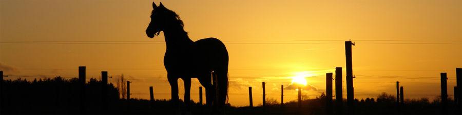 Caballo Horsemarket - Die Pferdevermittlung