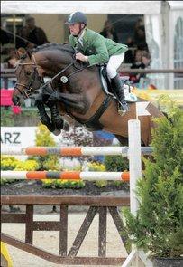 Oldenburger Pferd