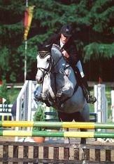 Mecklenburger Pferd