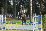 8jährige Holsteiner Mare with tremendous jumping ability