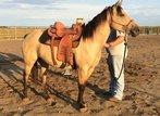dun quarter mare horse for sale