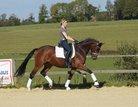 Full-sister to the Danish champion Stallion 2010 Rausing
