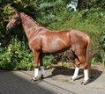 Great Junior Tournament experience * dressage horses common