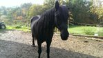 Queeny - A Sweet Mare, Perfect for any Rider!