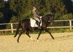 Toller Rapp-Ponywallach für Sport und Freizeit