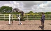 Very good Jumping Horse