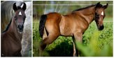 Colt foal of by Borsalino K