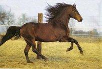 Altér Real Pferd