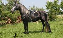 Warlander Horse