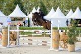 Künftige Grand Prix-Pferd
